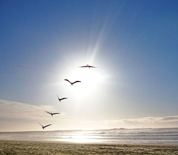 Several birds ascending in a line