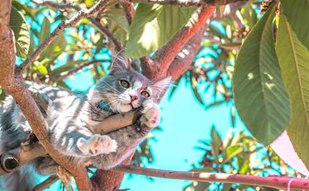 A cat lounging in a tree